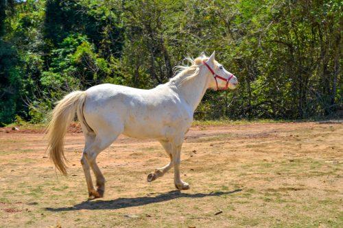 Hotel Fazenda Para Lua de Mel em SP - Passeio a Cavalo