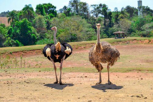 Animais e clima da fazenda