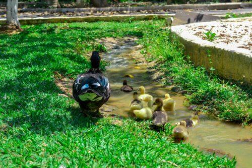 Observação de animais - Aves