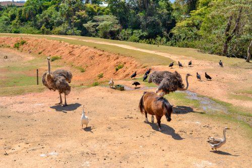 Observação de animais